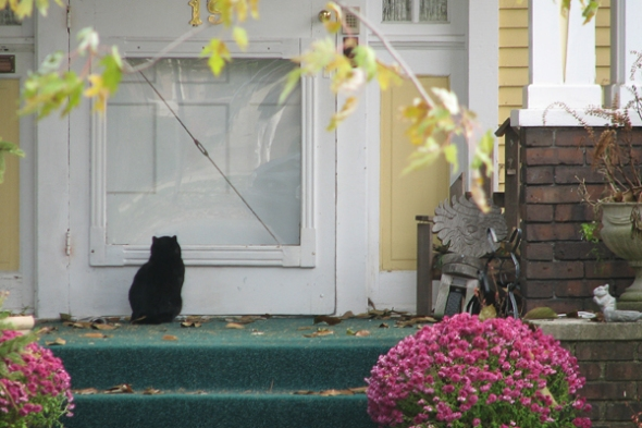 Black Cat at the door