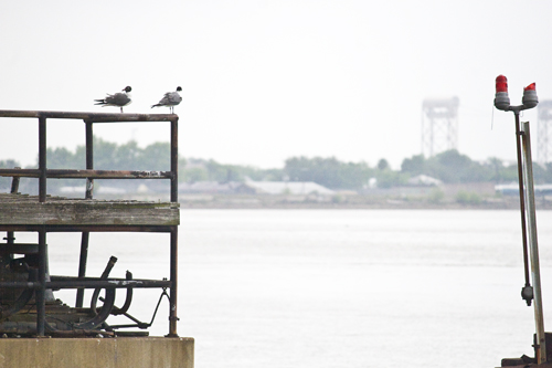 Two Gulls on a Rail