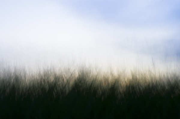 Abstract of grasses against sky